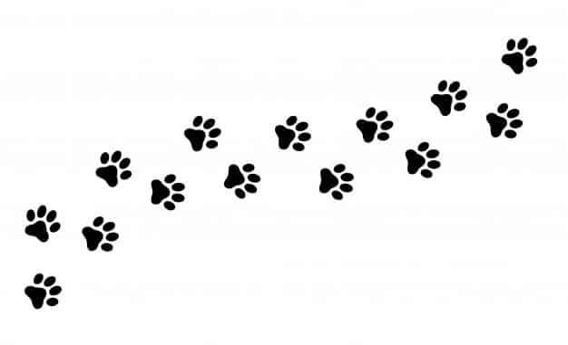 Campagne de capture de chats sauvages sur la commune mois de novembre